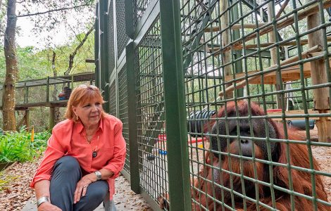 Patti Ragan, Founder and Director of Center for Great Apes Presents at St. Andrew's Village!